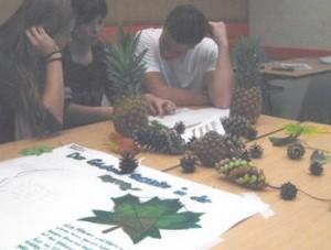 Tag der Mathematik 2013 an der FOS: Der goldene Schnitt bei Pflanzen
